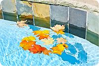 Piscine feuilles mortes
